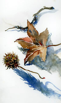 sweetgum pods and leaves