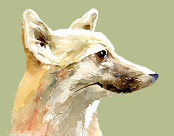 Fox -- Head in Profile
